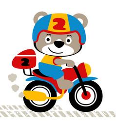 little bear cartoon driving motorcycle vector image