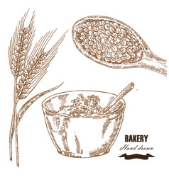 cereals set hand drawn sketch wheat barley vector image