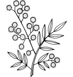 mimosa branch - coloring page isolated doodle and vector image
