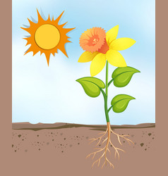 scene with flowers growing in bright sunny day vector image