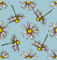 seamless pattern with hand drawn colored chamomile vector image