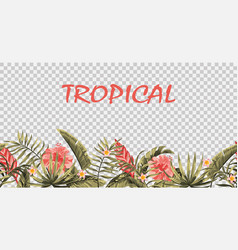 seamless tropical border transparent background vector image