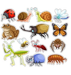 Sticker set of many insects vector