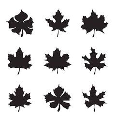 Set of nine Maple-leaf silhouette vector image