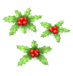 Christmas holly berry leaves and fruit set vector image
