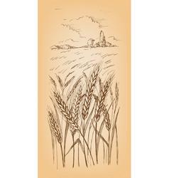 field of wheat barley or rye vector image