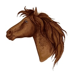 Brown graceful royal horse portrait vector