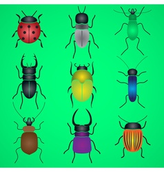 color bugs and beetles icons set eps10 vector image vector image