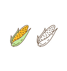 set fresh corn in cob colorful line art and vector image