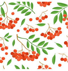 Branch of ashberries isolated on white seamless vector