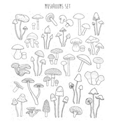 collection of hand drawn different types mushrooms vector image