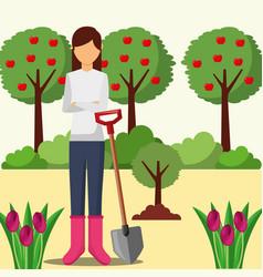 gardener woman planting tree with shovel gardening vector image