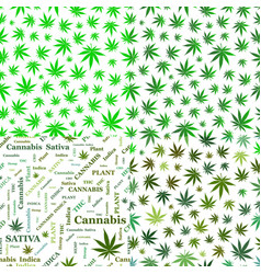 Seamless patterns with cannabis leaves green vector