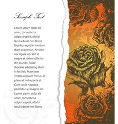 torn cardboard with roses vector image