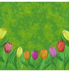 Flowers tulips on green background vector