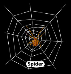 spider cobweb and isolated vector image