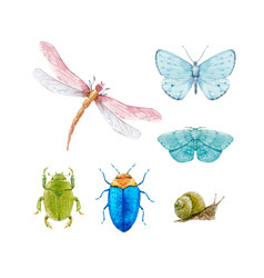 Watercolor insect set vector