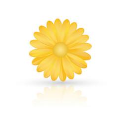 golden flower on white background vector image vector image