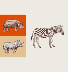 african animals rhinoceros hippopotamus wild vector image