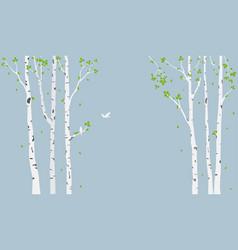 beautiful birch tree branch vector image