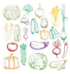 Healthy organic farm vegetables sketch symbols vector image