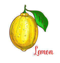 lemon sketch isolated fruit icon vector image