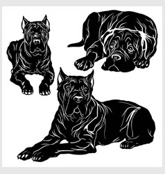 Cane corso - set isolated on vector