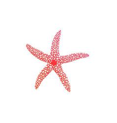 Cartoon icon or symbol pink sea starfish flat vector