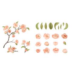 Cherry flower set isolate on white background vector