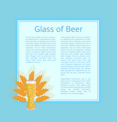 glass of beer background wheat poster with text vector image