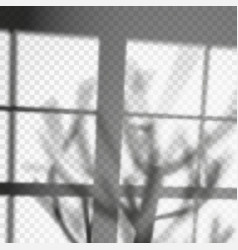 tree shadow or plant branch overlay on wall vector image