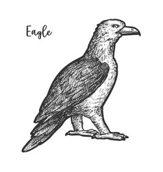 eagle sketch or hand drawn bird sign vector image