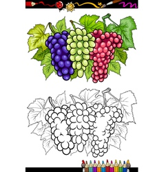 Grapes fruits for coloring book vector