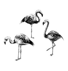 hand drawn flamingoes vector image