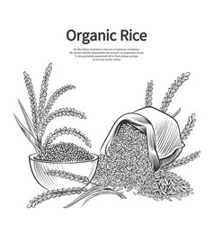 Hand drawn rice background rice sack bowl and vector