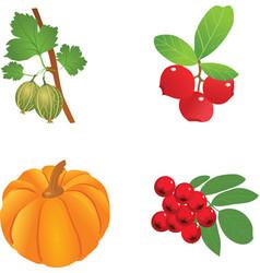 The branch of gooseberry on the whiteSeveral berri vector image