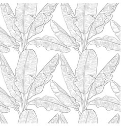 banana leaves pattern vector image vector image