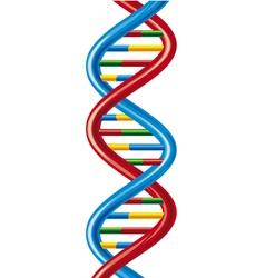 DNA-deoxyribonucleic acid vector image vector image