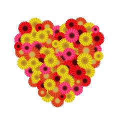 Heart symbol of gerberas vector
