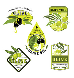 icons of olives and italian olive oil vector image