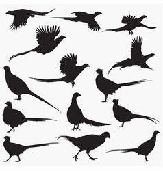 pheasant silhouettes vector image