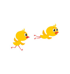 cartoon cute chicken characters set vector image