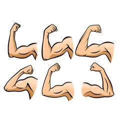 cartoon hand muscle strong arm boxer arms vector image