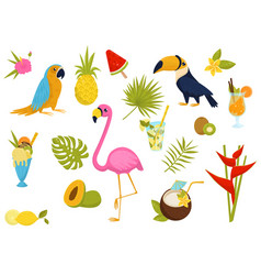 flat set of tropical elements beautiful vector image