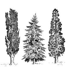 set hand drawn trees italian cypress and stone vector image