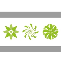 color flowers green vector image
