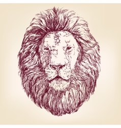 Lion hand drawn llustration realistic sketch vector image