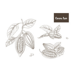 Collection botanical drawings whole and vector