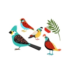 Colorful biirds set vector
