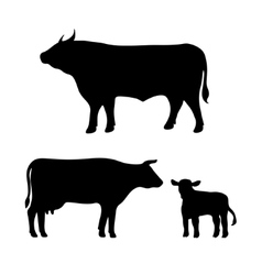 Cow bull calf vector